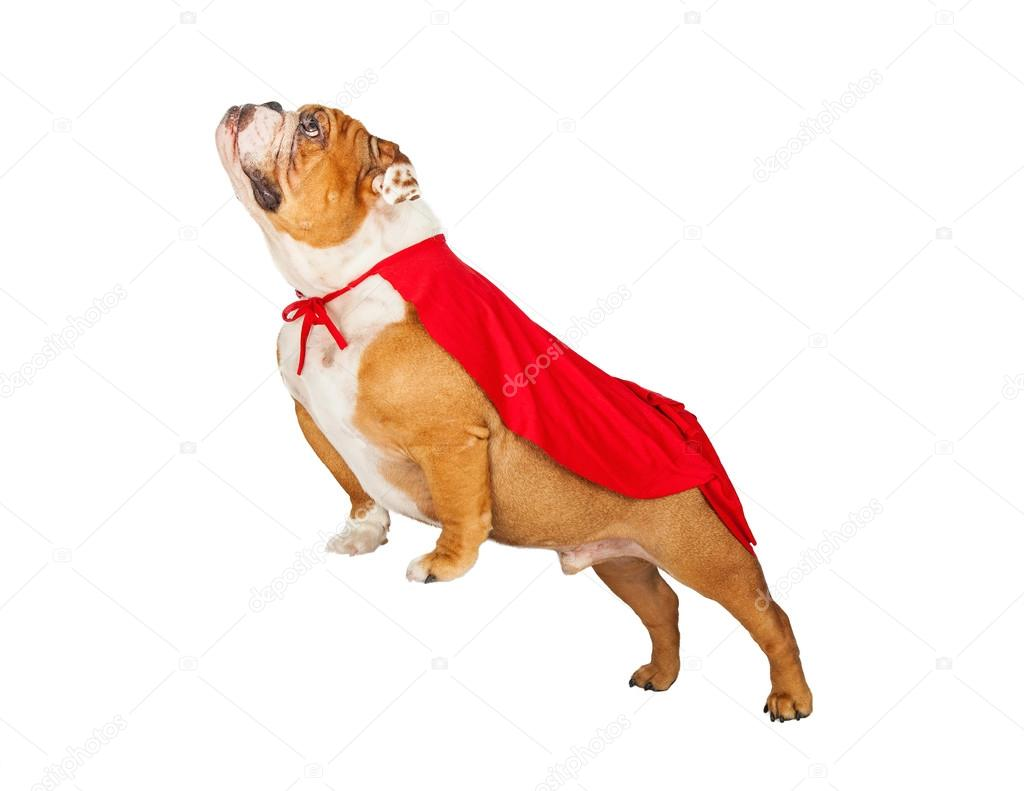 Depositphotos 77423998 Stock Photo Dog Wearing Super Hero Cape